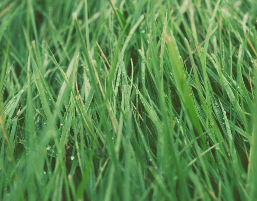 How to keep your grass healthy during the hot and humid months