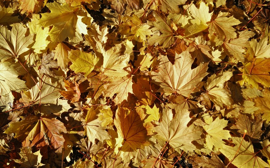 6 simple tasks to ensure your yard is prepared for Winter
