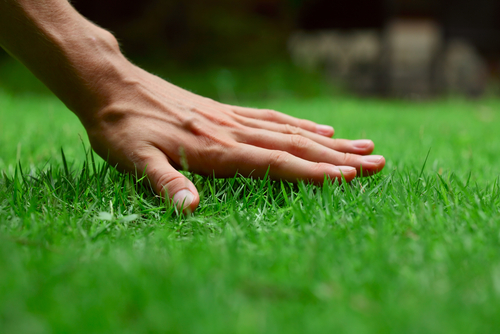 Lawn maintenance: do this, not this…